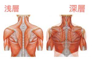 身体内部イメージ